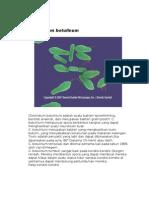 Clostridium botulinum,fix