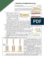 Capítulo 6 - Replicación, reparación y recombinación del DNA
