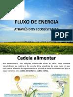7_energia_cadeias_alimentares_81087_98015