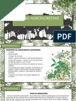 Mod5 - Principios da Agrofloresta Sucessional