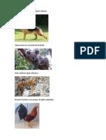 ANIMALES DE ORIGEN CON PRONOMBRES PERSONALES.docx