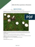 Ciuperci comestibile din flora spontana a Romaniei.pdf