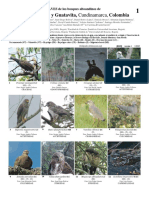 guia de aves de Guasca, Tabio y Guatavita