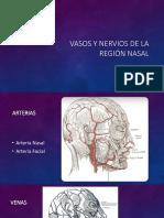 Vasos y nervios de la región nasal