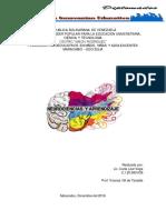 Trabajo Neurociencias y Aprendizaje