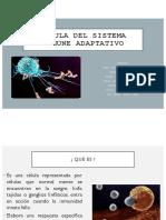 Equipo 1 Células Respuesta Inmune Adaptativa FTP02A 20-2