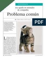 Diarrea aguda en animales de compañía