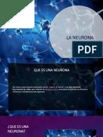 La neurona (1).pptx