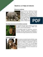 Animales Mamíferos en Peligro de Extinción