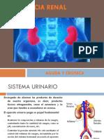 INSUFICIENCIA RENAL CRONICA Y AGUDA2