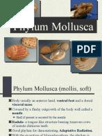 PPT Animal-Moluska.ppt