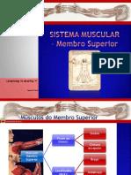 Musculos membro superior