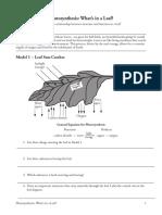 Photosynthesiscombinedpogil 3