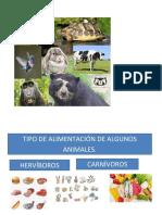 trabajo animales segun su alimentacion.