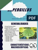 Aspergillus.pptx