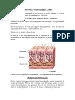 ESTRUCTURAS Y FUNCIONES DE LA PIEL