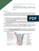 Sistema Reprodutor Masculino - ANATOMIA