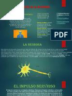 BASES BIOLÓGICAS DE LA ACTIVIDAD PSÍQUICA