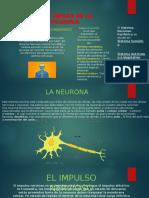 BASES BIOLÓGICAS DE LA ACTIVIDAD PSÍQUICA.pptx