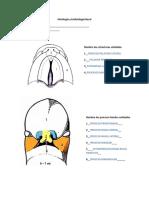 Imágenes procesos faciales