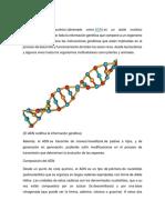 ADN y Tipo de Mutaciones