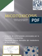 micotoxicosis-cerdos.pptx