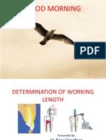 Working Length - Copy