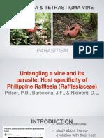 Rafflesia & Tetrastigma.pptx