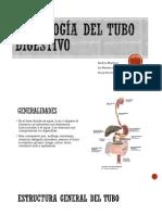 EXPO-HISTOLOGIA TUBO DIGESTIVO MEDICINA 2018-1 (1)