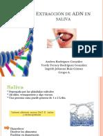 Extracción-de-ADN-en-saliva