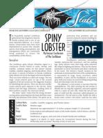 Sea Stats - Spiny Lobster
