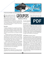 Sea Stats - Groupers