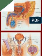 Gambar reproduksi manusia