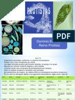 protistas 9.pptx