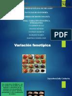 VARIACION FENOTIPICA grupo 2 (1).pptx