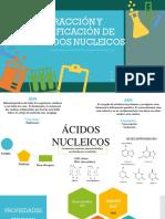 Acidos nucleicos equipo 3 semi(1)