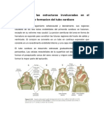 pre de embrio 1.docx
