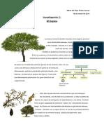 Acacia cavenia_espino