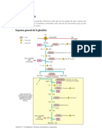 02.glucolisis.pdf