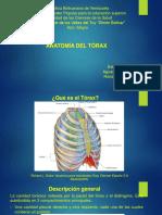Seminario de Anatomia de Torax