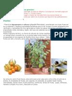 Kale Plantas y semillas con  imagenes_compressed.pdf