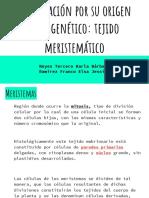 Clasificación del tejido mersitematico