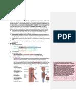 SISTEMA SOMATOSSENSORIAL 1.pdf