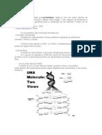 resumo - ácido nucléico