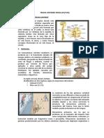 Truma Vertebro Medular