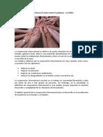 Cooperación internacional y lucha contra la pobreza.docx