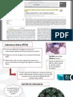 calicivirus felino