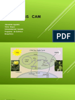 Fotosíntesis   cam.pptx