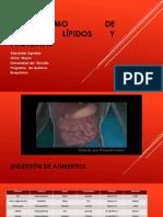 Catabolismo de glúcidos, lípidos  y proteínas [Autoguardado].pptx