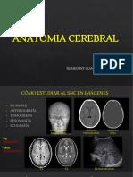 ANATOMIA_CEREBRAL